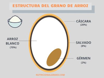 Diagrama de la Estructura del grano de arroz